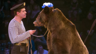 Αρκούδα επιτίθεται στον θηριοδαμαστή της μπροστά στο έντρομο κοινό του τσίρκου