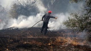 Φωτιά στα Τεμένια Χανίων