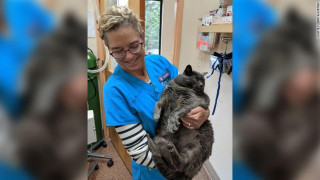 Υπέρβαρη γάτα «γκρεμίζει» το διαδίκτυο: Προπονείται καθημερινά για να χάσει τα «περιττά κιλά»