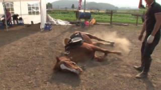 Άλογο γεννημένο… κωμικός: Δεν θέλει να τον ιππεύουν και το δείχνει με κάθε τρόπο