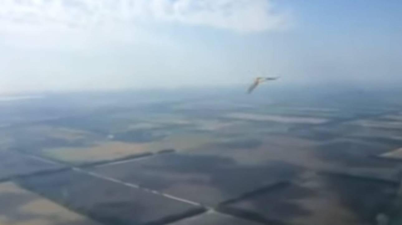 Τρόμος για πιλότους: Πουλί «καρφώνεται» σε τζάμι αεροπλάνου εν ώρα πτήσης