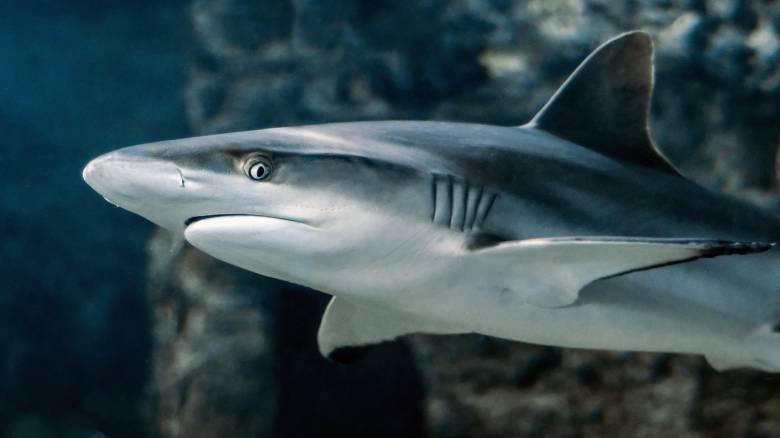 Αυστραλία: Καρχαρίας επιτέθηκε σε τουρίστες – Ακρωτηριάστηκε ένας 28χρονος