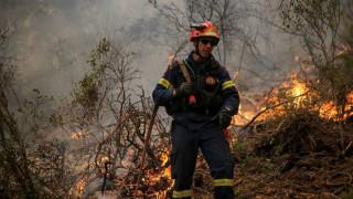 Φωτιά σε δασική περιοχή στην Πέλλα
