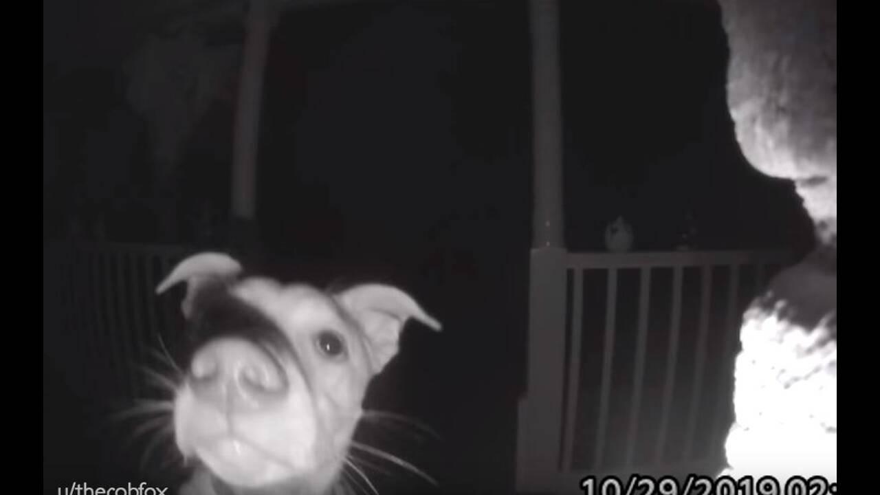 https://cdn.cnngreece.gr/media/news/2019/11/03/196049/photos/snapshot/dog1.JPG