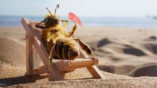 Αυτή είναι η πρώτη μέλισσα… influencer
