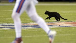 Μια μαύρη γάτα διέκοψε... αγώνα του αμερικανικού ποδοσφαίρου