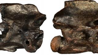 «Παραξενόφις» & «Περιεργόφις»: Τα προϊστορικά φίδια που υπήρχαν μόνο στην Ελλάδα