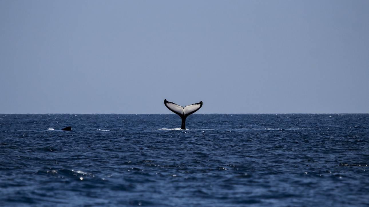 «Η Φάλαινα»: Ένας προορισμός για whalewatching στον νορβηγικό Αρκτικό κύκλο