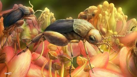 Ανακαλύφθηκε στη Μιανμάρ το αρχαιότερο απολίθωμα που δείχνει επικονίαση λουλουδιού από έντομο
