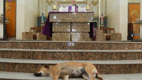 Ένας ιερέας με όραμα: Φιλοξενεί αδέσποτα στην εκκλησία και τα δίνει για υιοθεσία