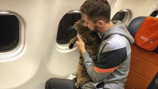 Πώς ένας επιβάτης έχασε όλα τα προνόμια και τα δωρεάν μίλια του εξαιτίας του... υπέρβαρου γάτου του