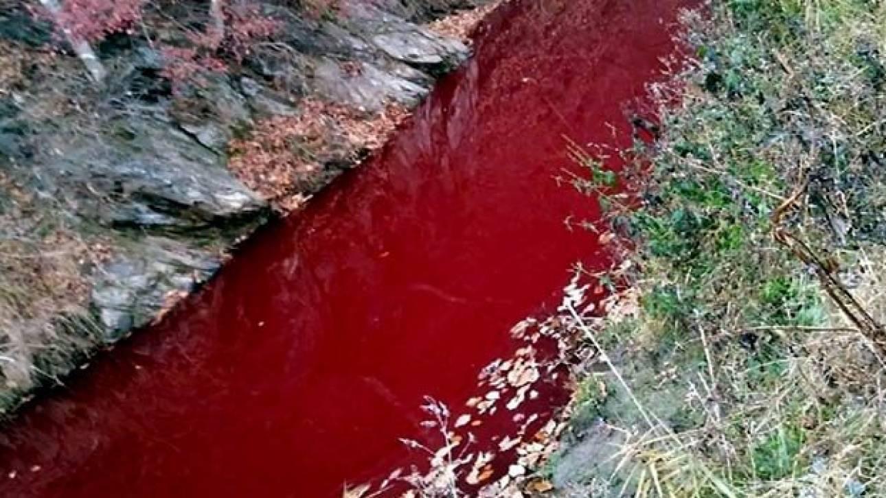 Νότια Κορέα: Κόκκινος «βάφτηκε» ποταμός μετά τη σφαγή χιλιάδων γουρουνιών