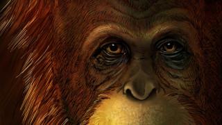 Ο γιγαντοπίθηκος της Κίνας υπήρξε ο μεγαλύτερος πίθηκος που έζησε ποτέ στη Γη