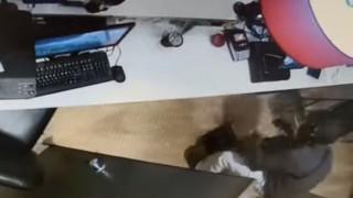 «Επαναστατική Αυτοάμυνα»: Βίντεο - ντοκουμέντο από την ληστεία στον Χολαργό