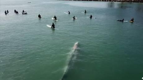 Μία φάλαινα κάτω απ'τα πόδια τους: Ένα θεαματικό βίντεο από drone