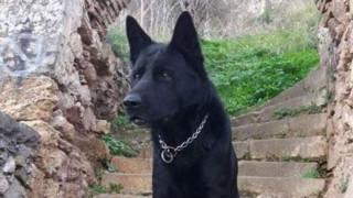 «Δεν θα σε ξεχάσουμε»: Το «αντίο» της Ελληνικής Αστυνομίας στον Blacky