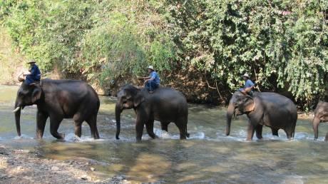 Η Καμπότζη έτοιμη να απαγορεύσει τις βόλτες με ελέφαντα στο Angkor Wat