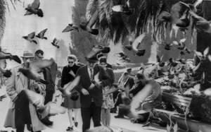 1964, Σαν Φρανσίσκο. Πεζοί κυριολεκτικά παλεύουν να περάσουν ανάμεσα από τα περιστέρια, στην πλατεία Union του Σαν Φρανσίσκο. Οι αρχές της πόλης πέρασαν έναν νόμο που απαγορεύει το τάισμα των περιστεριών, καθώς ο αριθμός τους έχει αυξηθεί πέρα από κάθε έλ