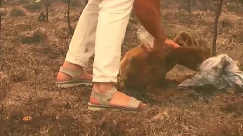 Δραματική διάσωση κοάλα από την πύρινη κόλαση στην Αυστραλία