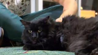 Απίστευτη περιπέτεια: Εξαφανισμένος γάτος εντοπίστηκε μετά από πέντε χρόνια... 1.900χλμ μακριά