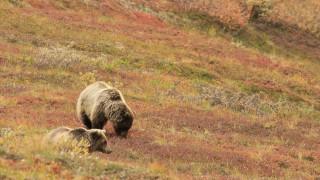 Ρουμανία: Τρομοκρατημένοι οι πολίτες από τις αρκούδες - Τρεις οι νεκροί τις τελευταίες εβδομάδες