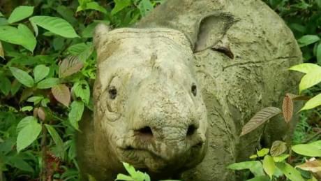 Φτωχότερο το ζωικό βασίλειο: Πέθανε ο τελευταίος ρινόκερος της Σουμάτρα