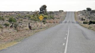 Αυστραλία: Οδηγός που σκότωσε εκ προθέσεως δεκάδες καγκουρό δεν θα μπει φυλακή