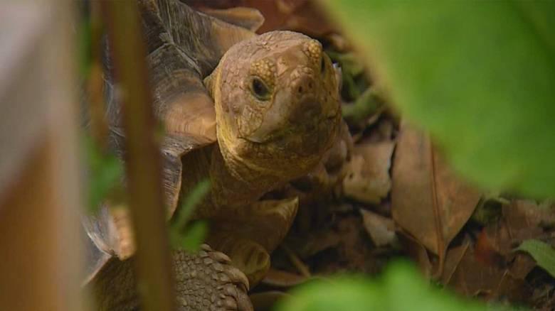 Ισημερινός: Πρόστιμο μεγαλύτερο των 10.000 σε οδηγό που πάτησε προστατευόμενη χελώνα