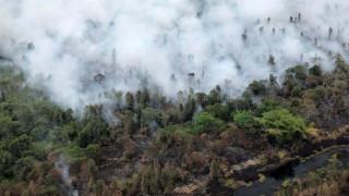 Το Βόρνεο φλέγεται: Πώς η παγκόσμια ζήτηση για φοινικέλαιο καταστρέφει τα δάση στην Ινδονησία