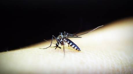 Κουνούπια: Πώς τα... ενοχλητικά έντομα άλλαξαν τον κόσμο μας
