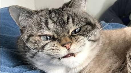 Λόκι: Αυτή είναι η γάτα… Κόμης Δράκουλας που έχει τρελάνει το Instagram