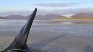 Σκωτία: Φάλαινα βρέθηκε νεκρή με μία «μπάλα» απορριμμάτων 100 κιλών στο στομάχι της