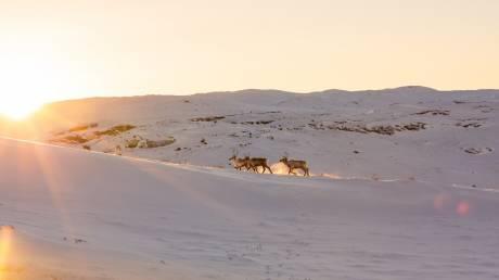 Πέντε λόγοι για να ταξιδέψετε στη Γροιλανδία το 2020
