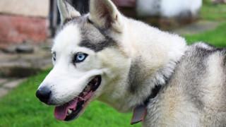 Βρετανία: Σκύλος άναψε τον φούρνο μικροκυμάτων και έβαλε φωτιά