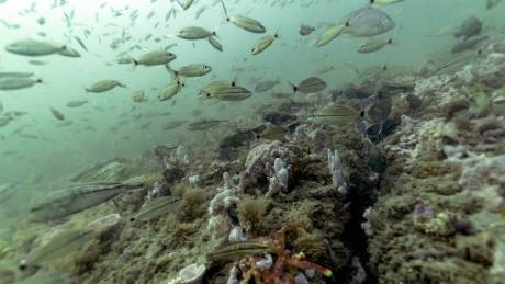 Έκθεση στον ΟΗΕ: Το οξυγόνο μειώνεται σε όλο και περισσότερες θαλάσσιες περιοχές