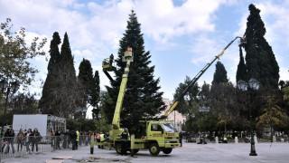 Σε Χριστουγεννιάτικους ρυθμούς η Αθήνα: Οι πρώτες εικόνες από το δέντρο στο Σύνταγμα