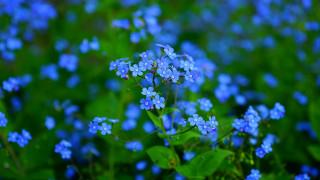 Αποκαλυπτική έρευνα: Τα φυτά... ουρλιάζουν όταν στρεσάρονται