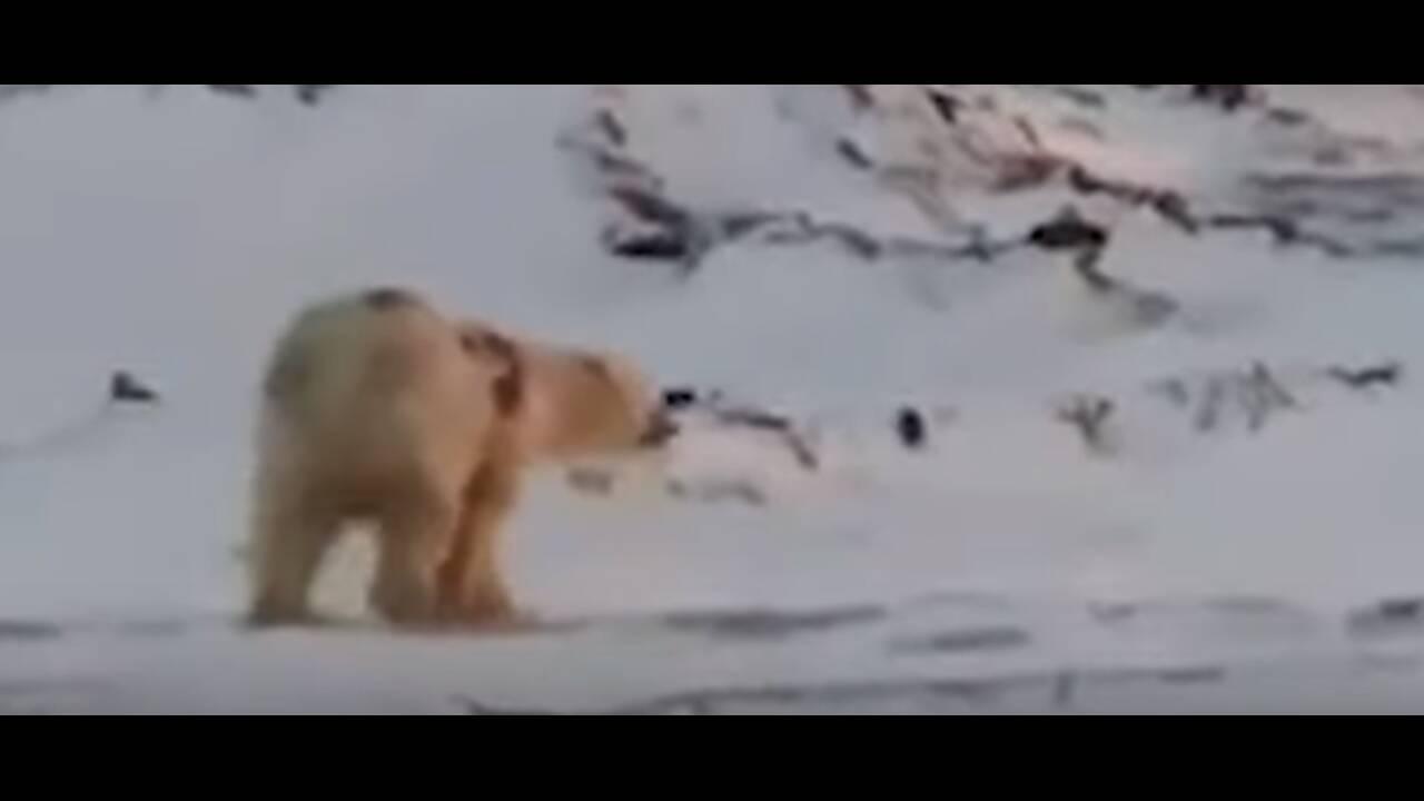 https://cdn.cnngreece.gr/media/news/2019/12/08/199967/photos/snapshot/bear3.jpg