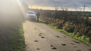 Μυστήριο στην Ουαλία: Εκατοντάδες πτηνά βρέθηκαν νεκρά στο δρόμο (pics&vid)