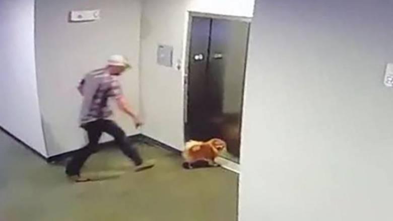 Εντυπωσιακή διάσωση: Έσωσε σκύλο στο... παρά πέντε