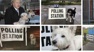 Viral οι σκύλοι που ψηφίζουν στις βρετανικές εκλογές