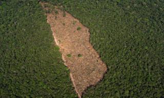 Βραζιλία: Σε επίπεδα ρεκόρ η αποψίλωση των δασών του Αμαζονίου