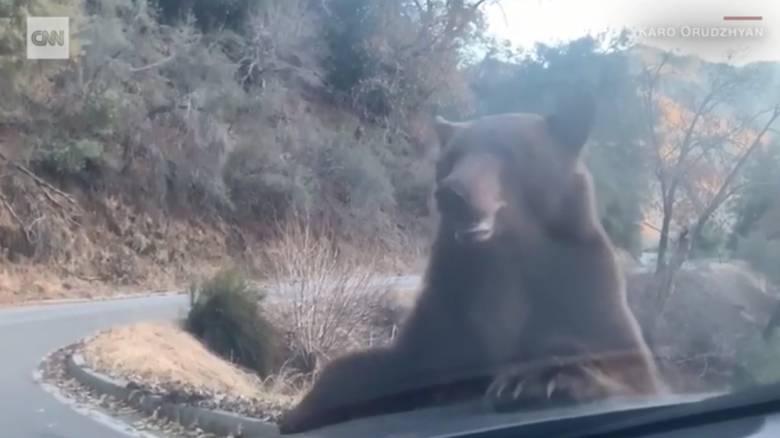 Απίστευτο βίντεο: Αρκούδα «επιτέθηκε» σε όχημα