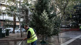 Νέο χριστουγεννιάτικο δέντρο στην πλατεία Εξαρχείων