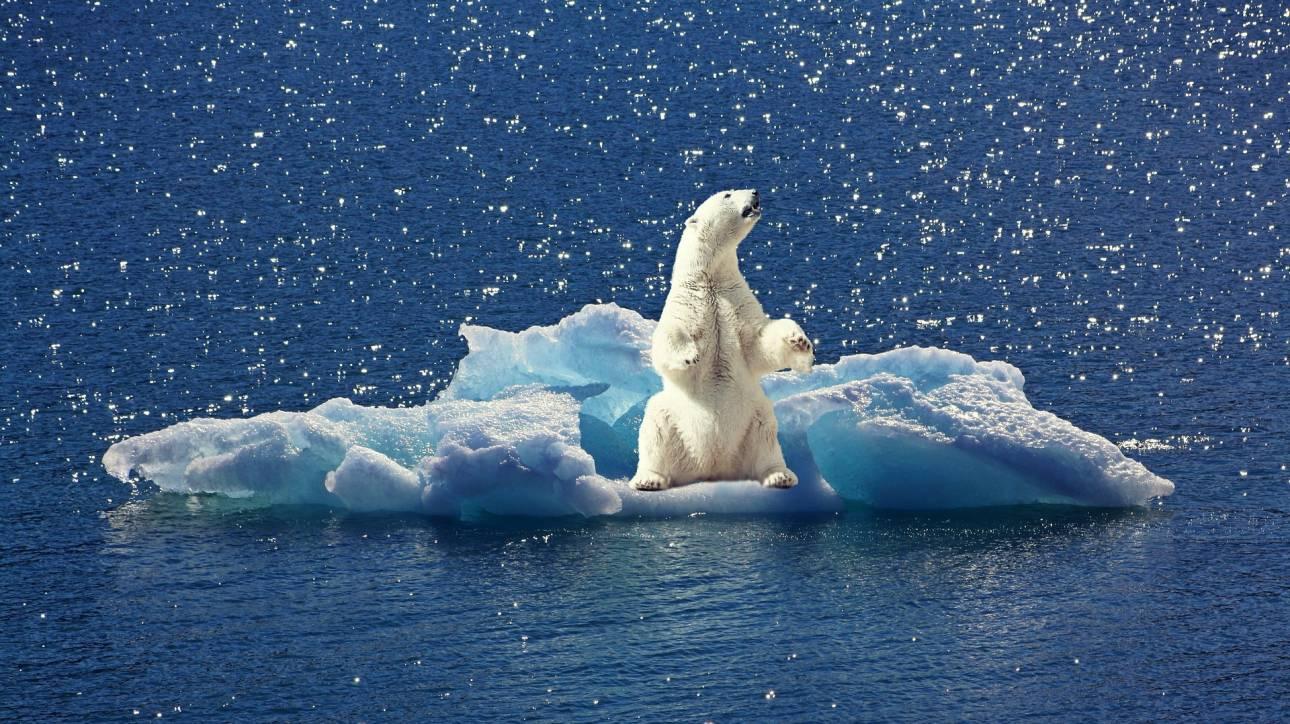 Βίντεο: Πολικές αρκούδες παλεύουν να σταθούν σε λιωμένους πάγους