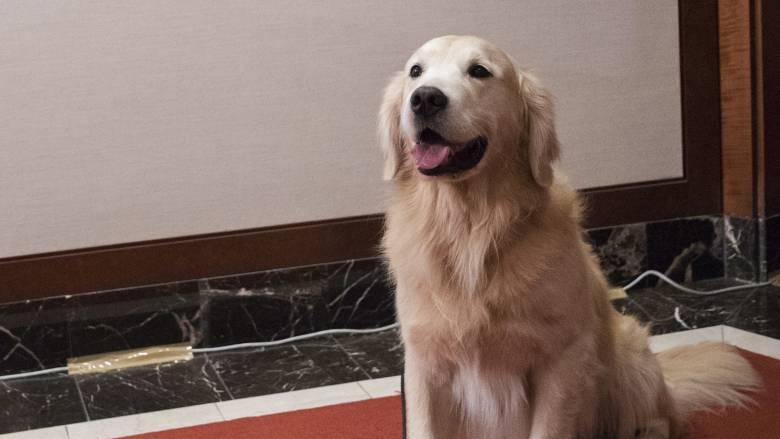 Αστυνομικός σκύλος έκλεψε... χριστουγεννιάτικα δώρα μέσα στο τμήμα