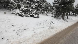 Κακοκαιρία «Ζηνοβία»: Έπεσαν τα πρώτα χιόνια στην Πάρνηθα