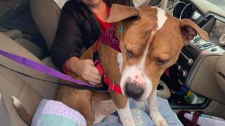 Πίσω στο σπίτι: Σκύλος που εκλάπη πριν δύο μήνες επέστρεψε στην οικογένειά του