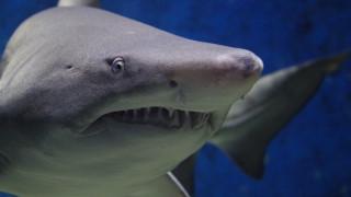 Μακάβρια ανακάλυψη: Ανθρώπινα λείψανα βρέθηκαν στο στομάχι καρχαρία