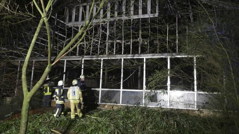 Γερμανία: Δεκάδες μαϊμούδες,χιμπατζήδες και ουρακοτάγκοι έχασαν τη ζωή τους σε πυρκαγιά στο Κρέφελντ